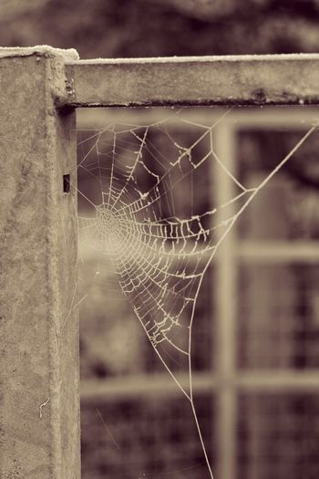 Spider web 🕸🕷 Spider Web Focus On Foreground Fragility Close-up Outdoors Day Spider No People Nature Water Web Animal Themes