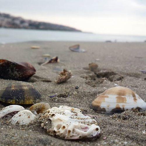 Istanbul Buyukcekmecesahil Denizkabukları Marmaradenizi