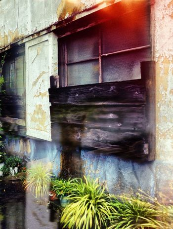 Window Built Structure Architecture Building Exterior Day Plant No People Abandoned Outdoors Glass - Material Reflection Growth House Transparent Old Close-up Weathered Nature Sunlight Building