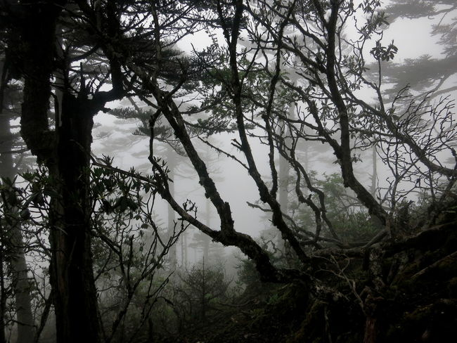 Foggy Weather Morning Beauty In Nature Branch Fog Foggy Morning Forest Magical Forest Mist Mysterious Nature No People Outdoors Tranquil Scene Tranquility Tree Tree Trunk Woods