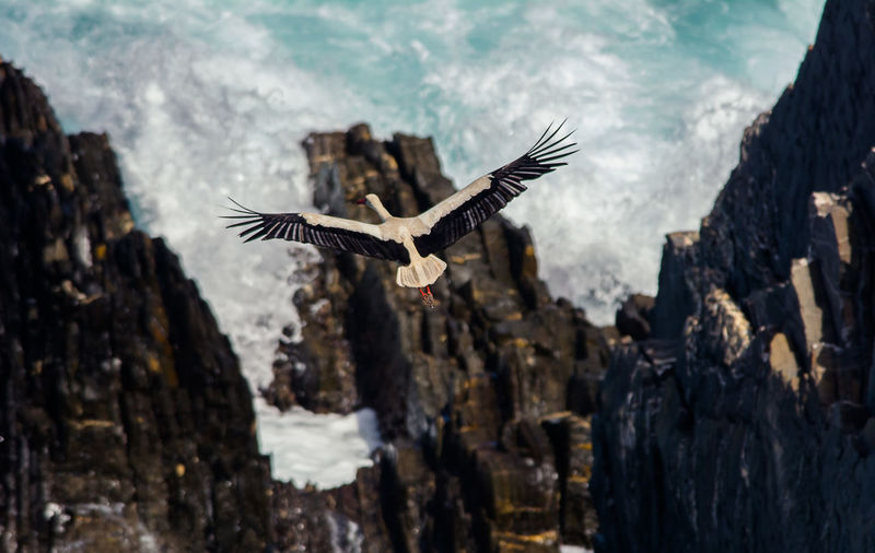 From My Point Of View Sea Motion Water Nature Flying Animal Bird Day Outdoors Rock Ocean View Cliffside Stork Perspective No People Mid-air Animals In The Wild Spread Wings Rock - Object Animal Themes One Animal Animal Wildlife Vertebrate Wings Of Freedom Wings Spread