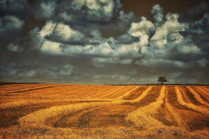 Scenic View Of Agricultural Landscape Against Cloudy Sky