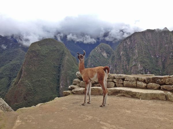 Walking Around Macchu Picchu Macchupicchu Machu Picchu