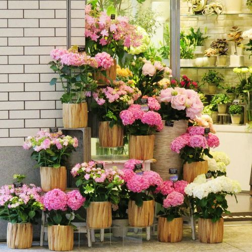 Flowers, Nature And Beauty Flowershop Pink Flower Pink! Pink