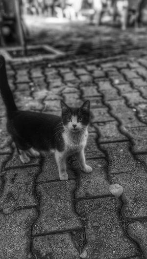 Kedi Cat HDR Black & White