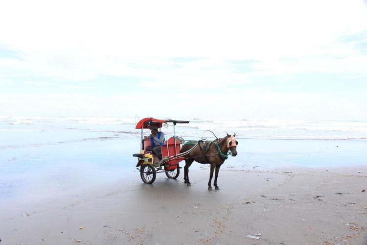 Horse cart on beach