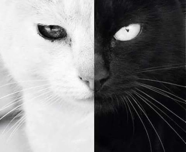Be A Cat First Eyeem Photo