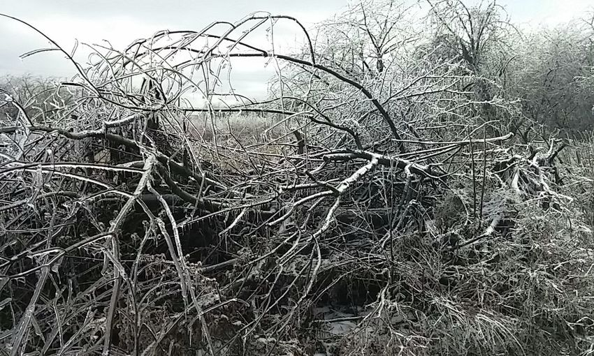 Tree Nature No People Branch Outdoors Sky Bare Tree Day Low Angle View Close-up Freezing Rain Freezing Beauty
