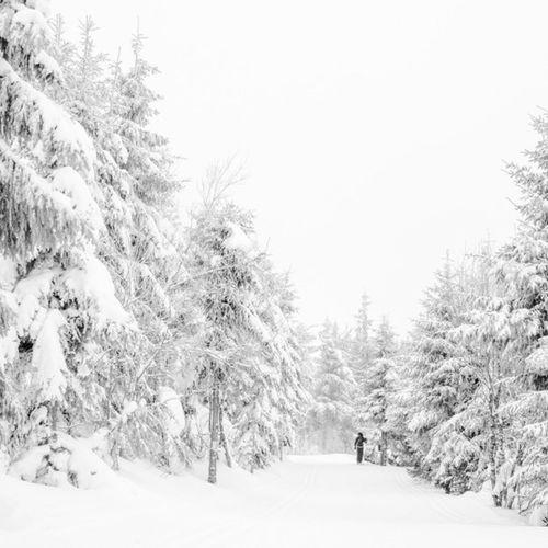 Cold Temperature Frozen Mezenc Nordic Skiing Ski Snow Snow Covered Tree White Color Winter