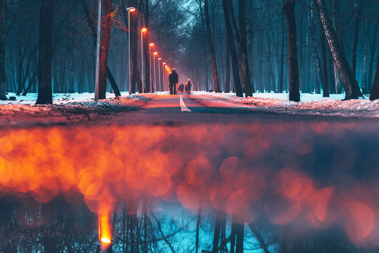 People standing by trees in forest during winter
