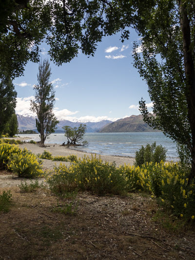 Camping Discover Your City Nature New Zealand Beauty New Zealand Landscape Wanaka Attraction Beauty In Nature Day Discovery Grass Growth Lake Lakeshore Landscape Mountain Nature New Zealand No People Outdoors Scenics Sky Tourism Tourist Destination Tranquil Scene Tranquility Tree Wanakalake Water