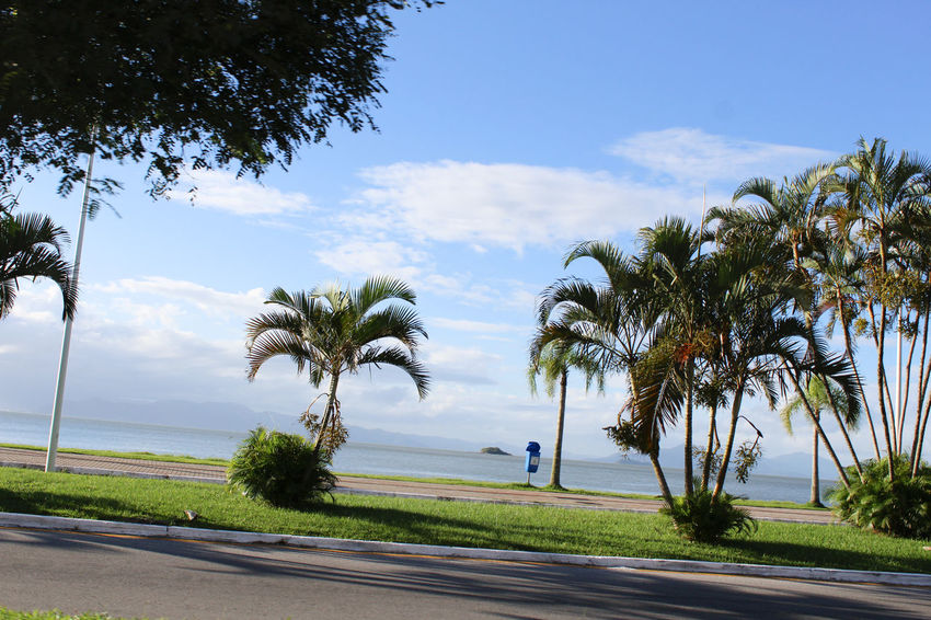 Orla beira mar com coqueiros Praia Mar Coqueiros Road Growth Sky Day Nature Scenics Palm Tree Beauty In Nature Tranquil Scene Tranquility Water