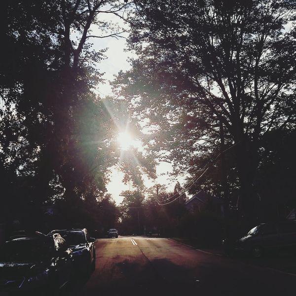 Sunlight Summer