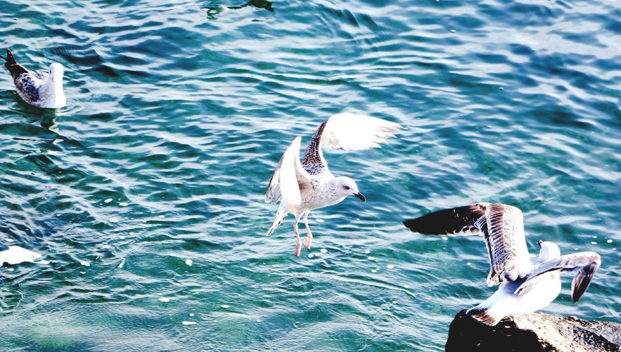 Bird in sea