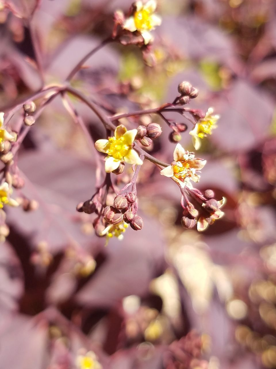 flower, growth, nature, blossom, fragility, no people, beauty in nature, tree, outdoors, freshness, day, branch, close-up