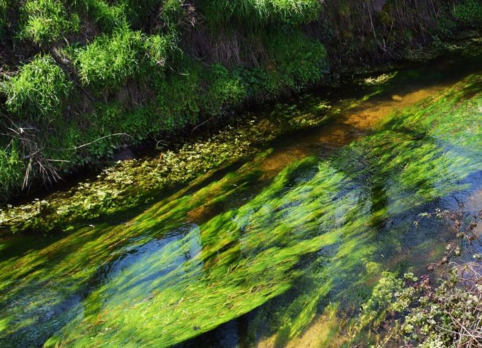 Beauty In Nature Forest Green Green Color Nature No People Outdoors River Tranquil Scene