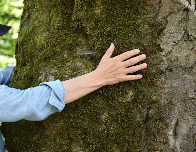 Close-up of hands on tree trunk