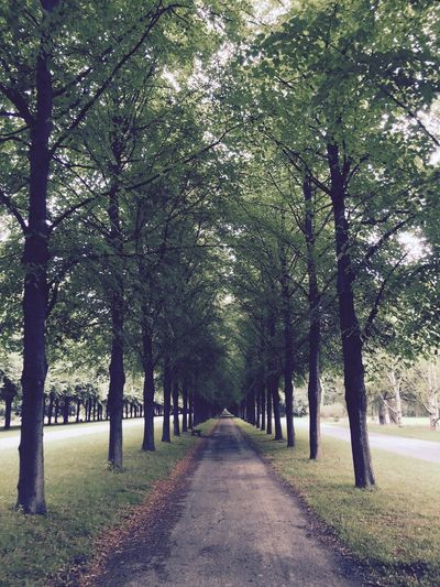 Allee Empty Road Green Color Long Nature Park - Man Made Space The Way Forward Tree