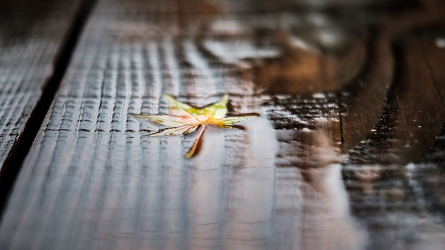 An abstract colored autumn leaf on a wet wooden floor with a shallow depth of field.