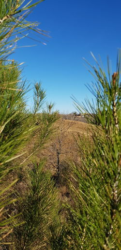 Tree Sand Dune