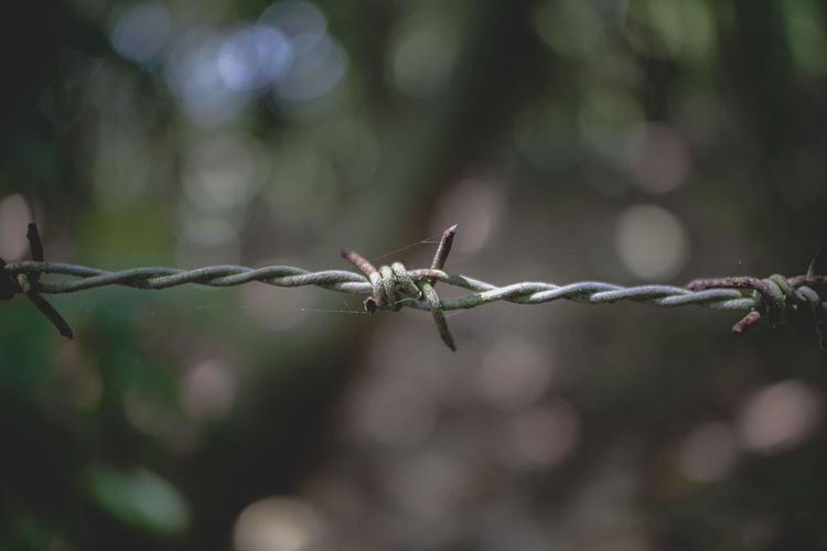 Close-up of barbed wire on fence