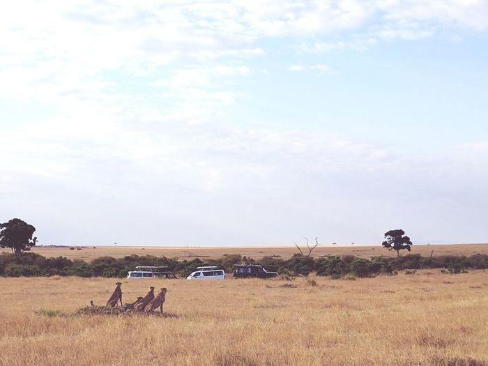 HuntingMasai Mara National Reserve