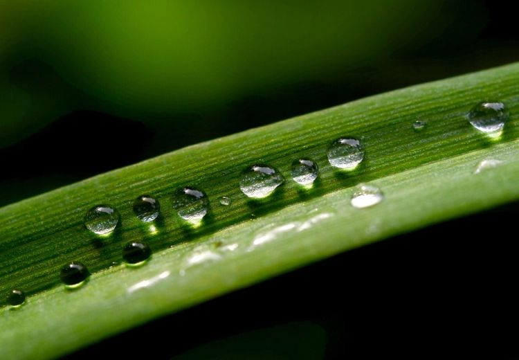 Regentropfen 🌧🎉✨ Green Color Drop Water Close-up Wet Leaf My Best Photo Plant Selective Focus No People Plant Part Nature Beauty In Nature Outdoors Focus On Foreground Grass Freshness Blade Of Grass Day Growth Rain