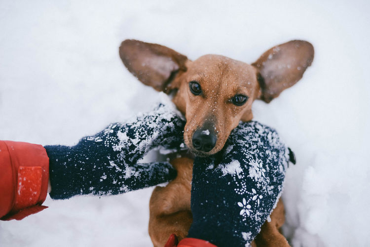 Cropped Hand With Dog During Winter