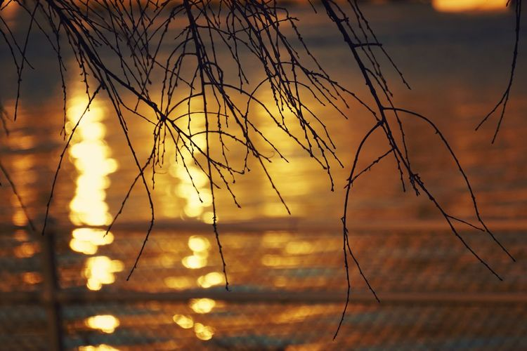 The fence Fence River Riverside Branches Sunlight Sunset Orange Sky Depth Of Field Marina Fences