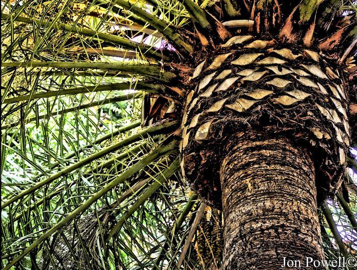 Palm Palm Trees Palm Tree Palmtree Palms Palmtrees Palm Trees ❤❤ Palm Tree Leaves Palm Tree Close Up Close Up Of Palm Tree Palm Tree Leaf Palm Tree Trunk Palm Close Up Tree Closeup Tree Close-up Tree Close Up