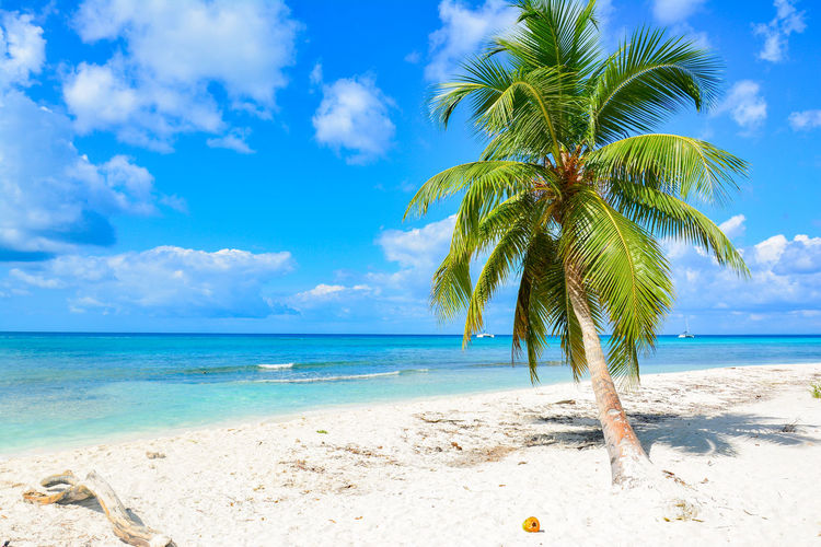 Beach Beauty Beauty In Nature Blue Cloud - Sky Day Horizon Over Water Idyllic Island Landscape Nature No People Outdoors Palm Palm Tree Postcard Sand Sea Sky Summer Tree Tropical Climate Vacations Water