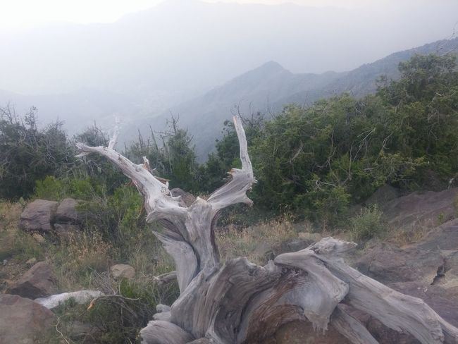 Asir , Sausi Arabia Green With Clouds Mountain View Mountains Mountains And Sky Nuture Nuture Photo Old Trees