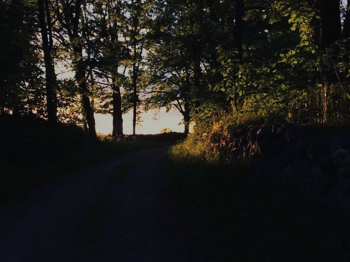 You Never Know whats around the corner Sunset Nature Sweden