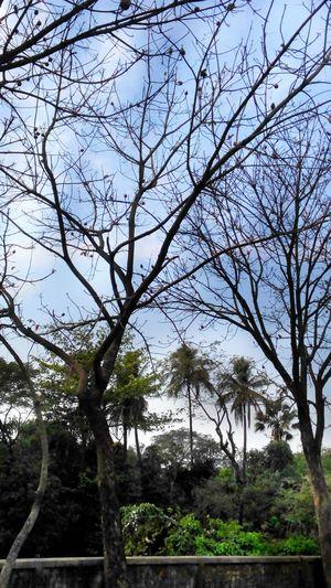 Nature Photography Naturshots Mobile Photography Mobile Shot Natural Beauty Natural Photography Tamimislamphotography
