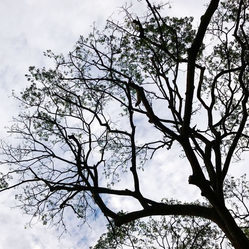 Branches grasping for the cloudy blue sky Tree Low Angle View Plant Sky Branch Nature Beauty In Nature Tranquility Cloud - Sky Tree Canopy  No People Outdoors
