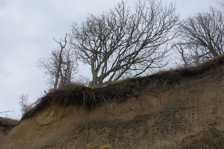 Baltic Sea In Winter Day Erosion Nature No People Outdoors Tree Trees And Sky