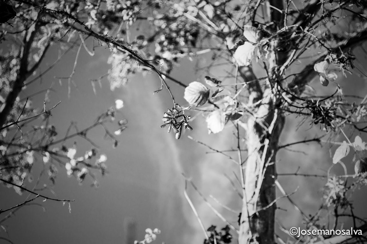 one animal, insect, animals in the wild, animal themes, focus on foreground, day, animal wildlife, outdoors, nature, no people, plant, branch, tree, close-up, flower, fragility
