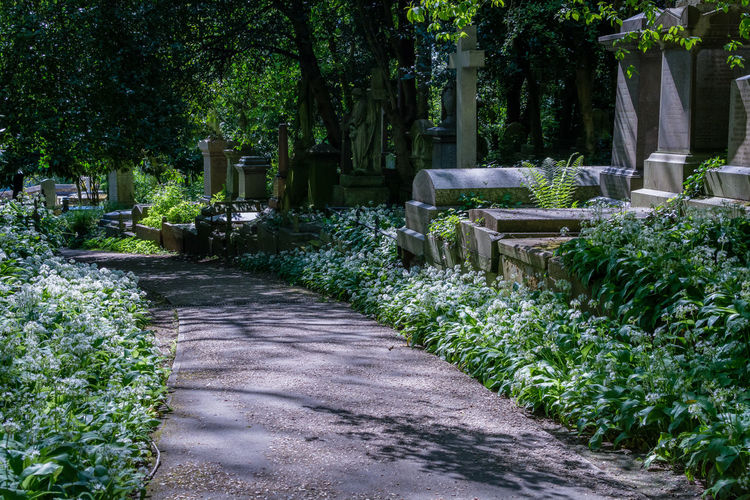 Footpath in cemetery