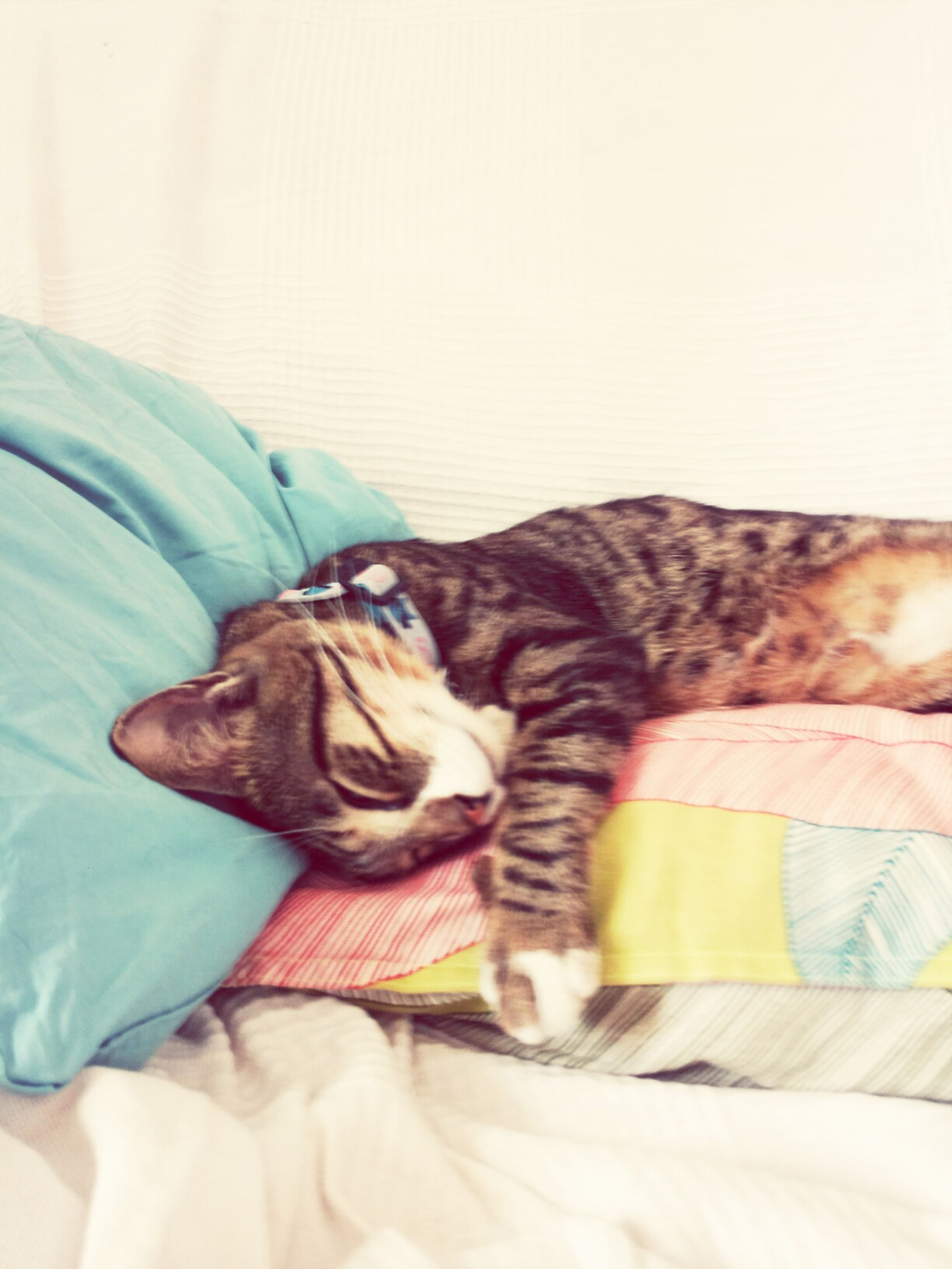 domestic animals, pets, animal themes, mammal, one animal, indoors, dog, relaxation, bed, resting, lying down, sofa, home interior, sleeping, comfortable, domestic cat, cat, full length, blanket, bedroom