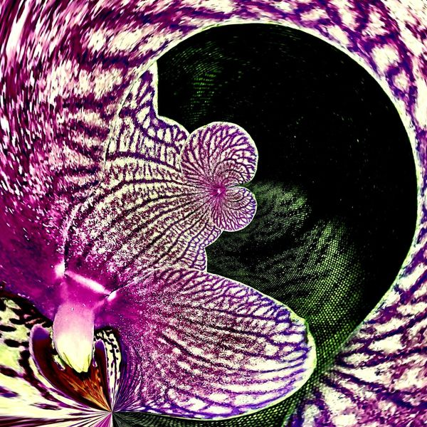 Close-up Orchid Cosmic Flower Cosmic Heavy Edit Flower Head Pink Color Flower Purple