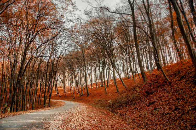 EyeEmNewHere Autumn Bare Tree Beauty In Nature Branch Change Day Forest Landscape Leaf Nature No People Outdoors Road Scenics Single Lane Road The Way Forward Tranquil Scene Tranquility Tree