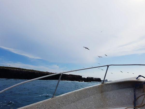 Albatros Enjoying Life Having Fun Flying Bird Islas Marietas Sea And Sky Check This Out Clouds And Sky