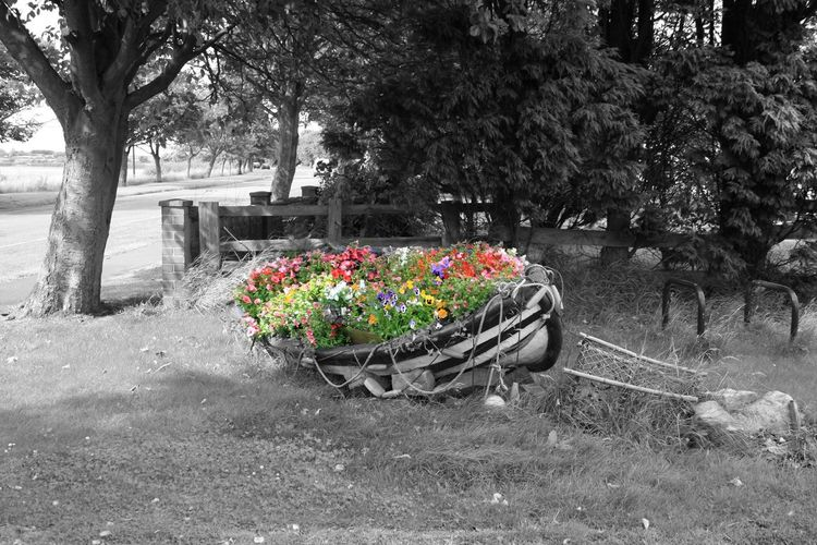 Beauty In Nature Boat Day Flower Flowerboat Freshness Grass Growth Nature No People Outdoors Plant Tree