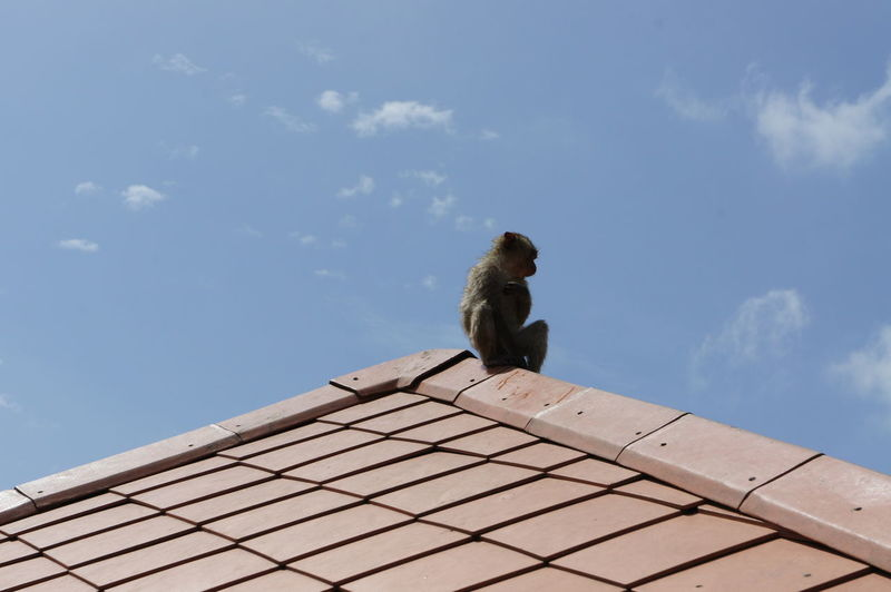 Low angle view of monkey perching on roof against sky