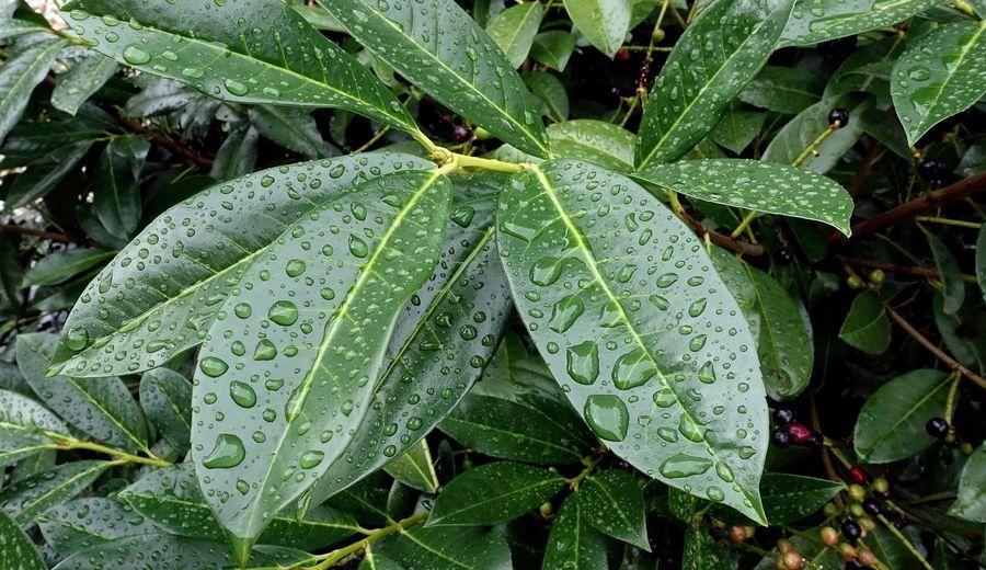 Regen grünes