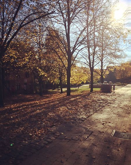 Autumn Colors 🍂 Autumn Autumn Leaves Louvainlaneuve Belgium Photography ManonMPhotography First Eyeem Photo