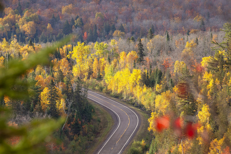 High angle view of a curving road by trees in autumn color in northern minnesota