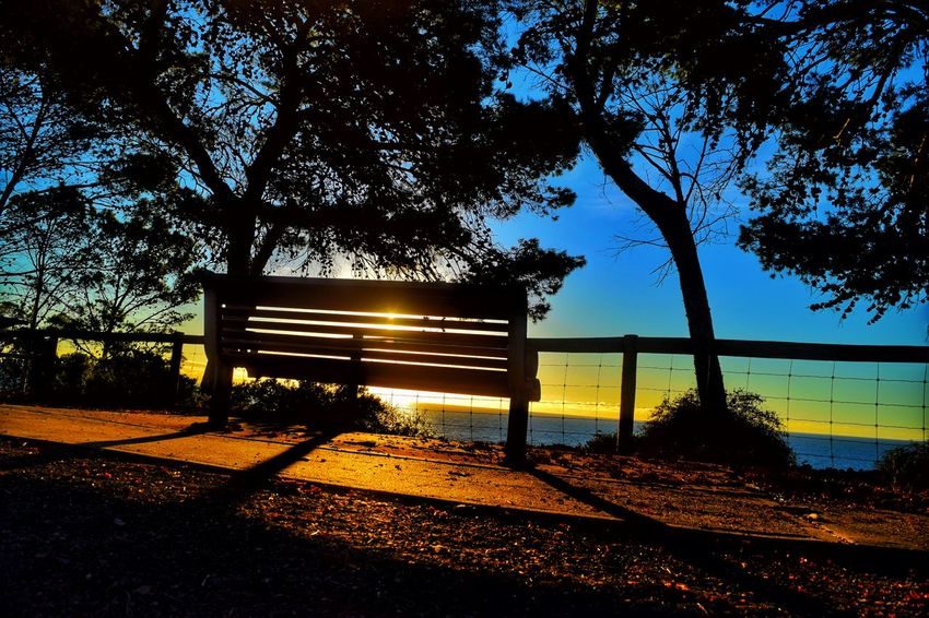 Seacliff South Australia Taking Photos Check This Out Hello World Relaxing Hi! Enjoying Life Tree Branches Treescollection Trees And Sky Eye Em Nature Lover Nature Photography EyeEm Nature Lover Nature_collection Eye4photography  Nature On Your Doorstep Nature_perfection Sunset Silhouettes Treesilhouette Tree_collection  Bench Park Bench Sunset Colors Sunset_captures Sunset_collection Shadows & Lights