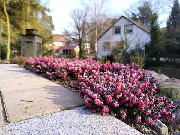 Leichter Frost in der Heide Blumen Flower Heide Winterheide Frost February Lila House Architecture Outdoors Building Exterior Built Structure Purple Beauty In Nature Day No People Nature
