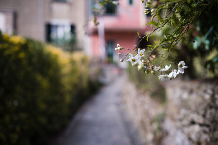 Road Architecture Beauty In Nature Building Exterior Built Structure Close-up Courtyard  Day Flower Focus On Foreground Fragility Freshness Growth Nature Nightshade No People Outdoors Pathway Solanum Tree Yard